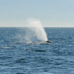 Foto de Prince of Whales Whale Watching