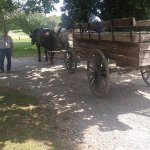 Optional carriage ride - recommended to shorten amount of time needed, especially on hot days!