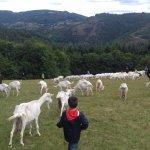 Activité rando-chèvres