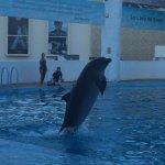 Dolphin show 1