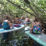 SUP Key West paddle boarding through the mangroves!
