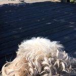 Stella by the boardwalk