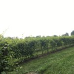 Great vineyard and winery.