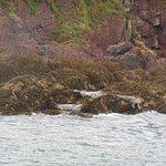 Seals seen on Caldey Island