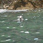 Seal seen just off Caldey Island