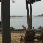 Photo de Morning Beach B&B and Cottage