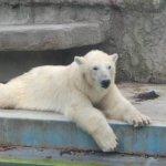 Budapest Zoo & Botanical Garden Foto