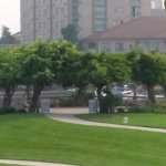 The tree Gazebo from the hill by Simpson walk looking east