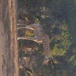 Schotia Tooth and Claw Safari Foto