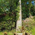 Foto di Muckross House, Gardens & Traditional Farms