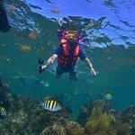 Puerto Morelos Dive
