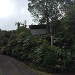 Pukeiti Rhododendron Garden의 사진