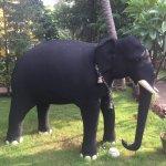 Bild från Paradise Resort