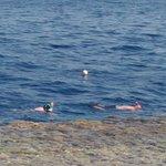 Photo de Shark's Bay Beach