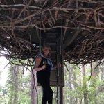 Treehotel Foto