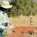 Tswalu Kalahari - Meerkat