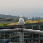 Jerry, the bird that hangs out on the concierge deck.