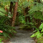 Volcano Rainforest Retreat Grounds