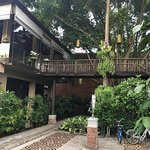 The Treehouse Bar