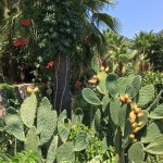 cacti& palm tree paradise