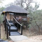 Marc's Treehouse Lodge Foto