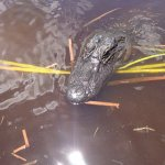 Photo de Ride The Wind Private Airboat Charters