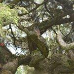 Photo de Morris Arboretum