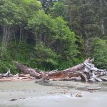 Photo of Pacific Rim National Park