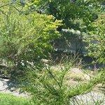 Foto de Jardin Botanique Lausanne