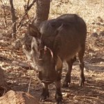 warthog outside our unit