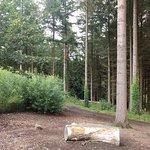 Foto de RHS Garden Rosemoor