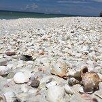Photo of Tigertail Beach