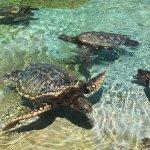 Sea Life Park Hawaii Foto