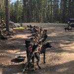 Foto di Alaska Sled Dogs & Musher's Camp