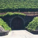 Foto de Kunde Family Winery