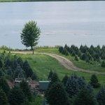 Pine Tree Barn照片