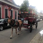 Horse & buggy tours all around the French Quarter