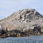 île Rozic et sa colonie de fus de Bassan