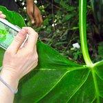Photo de National Park of Palenque