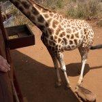 African Fund for Endangered Wildlife (Kenya) Ltd. - Giraffe Centre