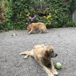 The Lodge's dogs know to lay down if you are eating.