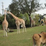 See the Giraffes