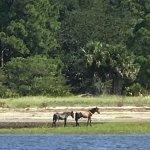 Wild horses on the beach at Cumberland Island.