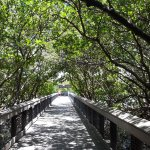 Photo of Lovers Key State Park