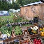 Fresh vegetables next to Comrie Croft Bikes.
