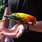 Birdworld Kuranda - Sun Conure