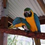 Birdworld Kuranda - Macaws