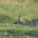 Встреча с фазаном
