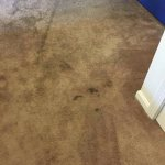some of the stains seen all over the carpet