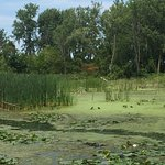 Bay City State Recreation Area Foto